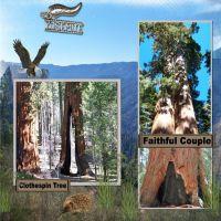 Yosimite-009-Sequoia-3.jpg