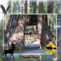 Yosimite-010-Sequoia-4.jpg