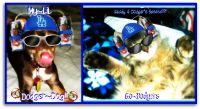 Animal_Dodgers_Collage.jpg