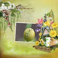 Spring-Reborn_Carena_s-Designs-000-Layout-1.jpg