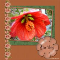 Abutillon-000-Page-1.jpg