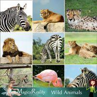 Animal-backgrounds-prev-SBM.jpg