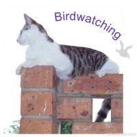 Birdwatching-000-Page-1.jpg
