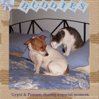 Buddies-A-Special-Moment_-000-Page-1.jpg