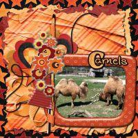 Camels_1.jpg