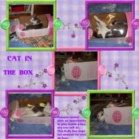 Cat-In-The-Box-000-Page-1.jpg