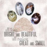 Cats-005-My-kids.jpg