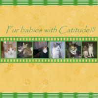Cats-008-fur-babies.jpg