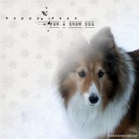 December-2009-002-Snow-Dog.jpg