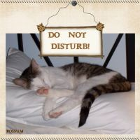 Do-Not-Disturb_-000-Page-1.jpg