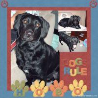 Dogs-Rule-000-Page-1.jpg