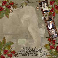 Elephant-Australia-Zoo.jpg