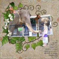 Elephant-Feeding.jpg