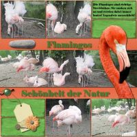 FLAMINGOS-FERTIG.jpg