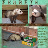 Ferrets-000-Page-1.jpg