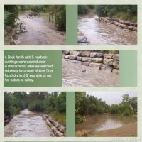 Flash-Flood-001-Page-2.jpg