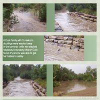 Flash-Flood-001-Page-2.jpg