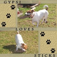 Gypsi-Loves-Sticks_-000-Page-1.jpg