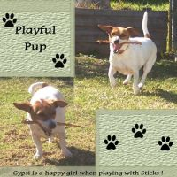 Gypsi-Loves-Sticks_-001-Page-2.jpg