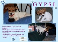 Gypsi-Our-Puppy-000-Page-1.jpg