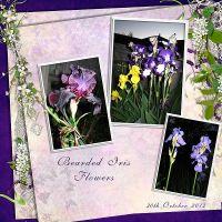 Iris-Flowers.jpg