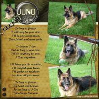 Juno_May_31_2008.jpg