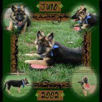 Juno_Sept_2002.jpg