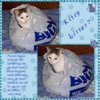 Kitty-Litter-000-Page-1.jpg