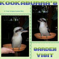 Kookaburra_s-garden-visit-000-Page-1.jpg