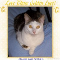 Love-Those-Golden-Eyes_-000-Page-1.jpg