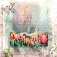 MRD_LoveUMama_tulip.jpg