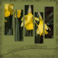 Miscellaneous-Pages-003-Tennessee-Wildflowers.jpg