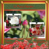 Moonbeam_Deanne-Gow-002-Barossa-Kit-Mary_s-Garden.jpg