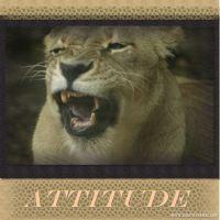 Ms_-Attitude-000-Page-1.jpg