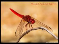 My-Scrapbook-006-darter.jpg