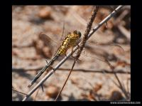 My-Scrapbook-008-yellow-dragon-fly.jpg