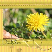 Nature-001-Dandelions.jpg