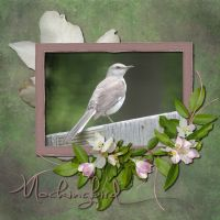 Nature-022-Mockingbird.jpg