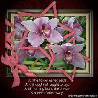 Orchid-Love.jpg