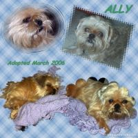 Our-Animal-Family-007-Ally.jpg