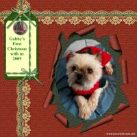 Our-Animal-Family-018-Gabby-Xmas.jpg