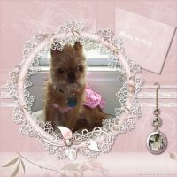 Our-Animal-Family-021-Molly-in-Pink.jpg