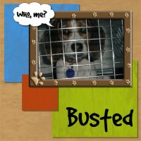 Pets-001-Busted.jpg