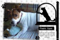 Pets-Plus-001-Page-2.jpg