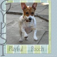 Playful-Pooch-000-Page-1.jpg