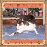 Playful-Possum-000-Page-1.jpg