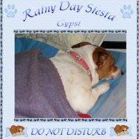 Rainy-Day-Siesta-000-Page-1.jpg