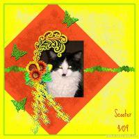 Scooter_1_sm.jpg