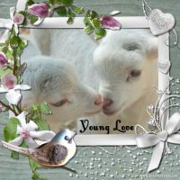 Spring_lambs_-and-flowers-000-Page-1.jpg