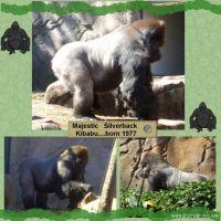 Taronga-Zoo-002-Page-3.jpg